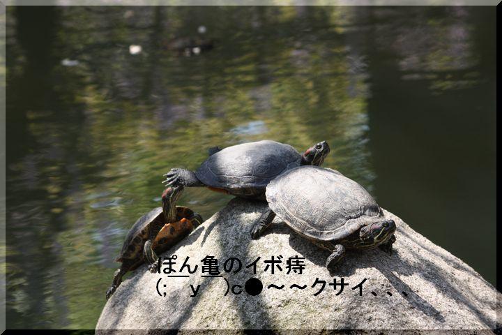 天王公園 フジ人9