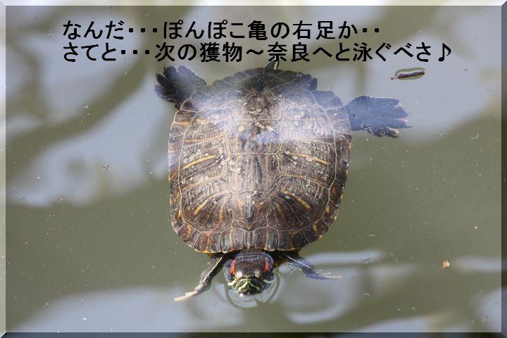 天王公園 フジ人7