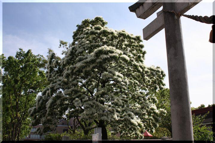 金神社ナンジャモンジャ2