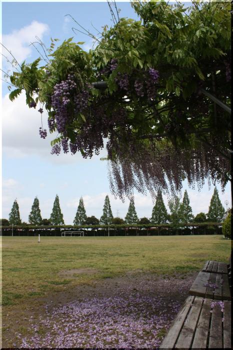 赤坂スポーツ公園7