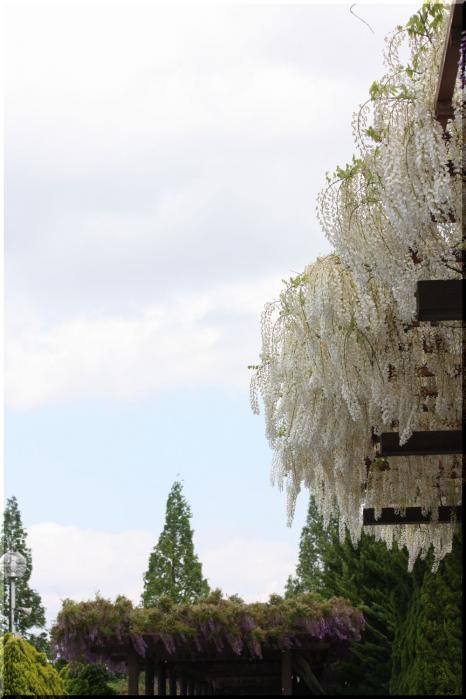 赤坂スポーツ公園8