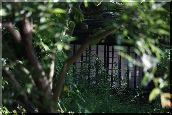 環境楽園11