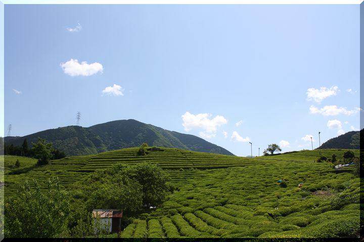~ 天空の茶畑2