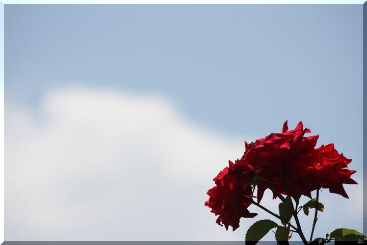 ~ 各務原薔薇2