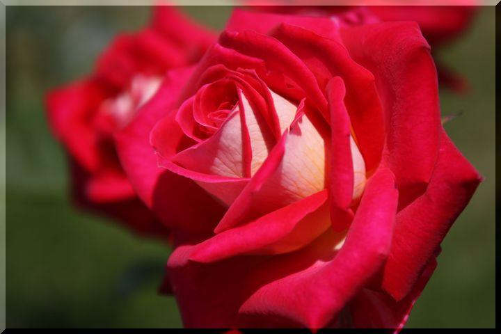 ~ 各務原薔薇3