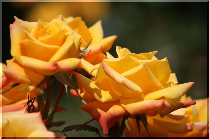 ~ 各務原薔薇4