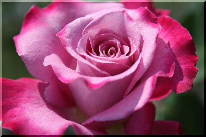 ~ 各務原薔薇7
