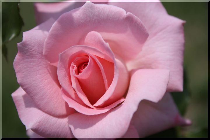 ~ 各務原薔薇8