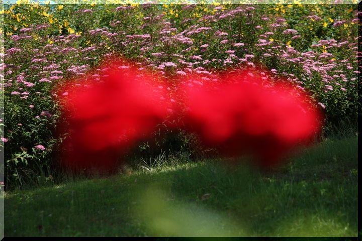 ~ 各務原薔薇10