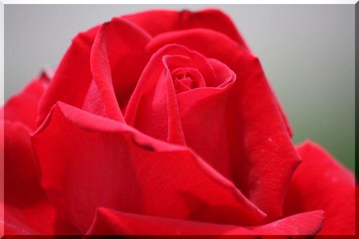 ~ 各務原薔薇12