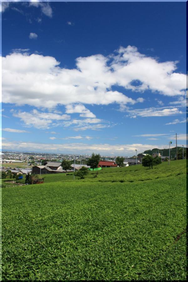 ~ 池田山茶畑3