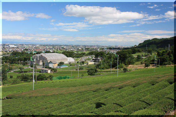 ~ 池田山茶畑8