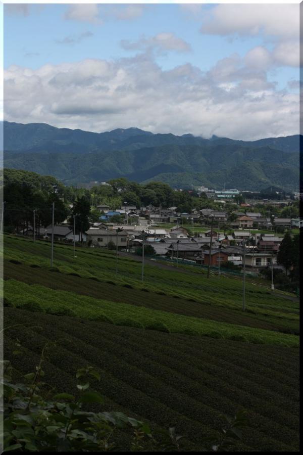 ~ 池田山茶畑14