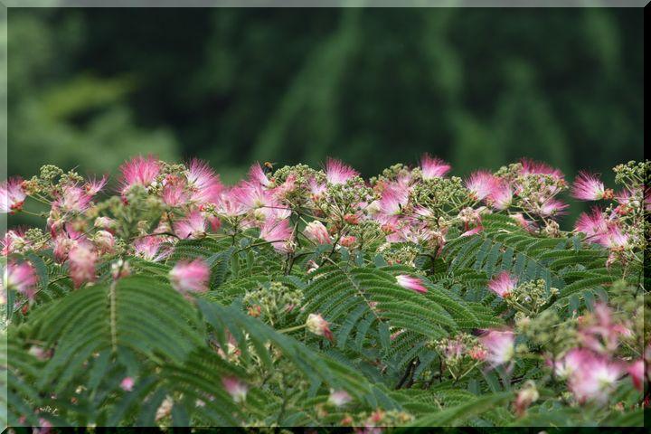 ~ 棚田に咲く花1