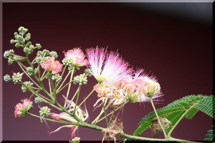 ~ 棚田に咲く花3