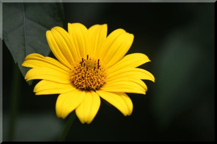 ~ 棚田に咲く花5