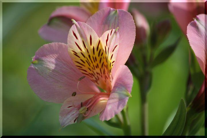 ~ 棚田に咲く花8