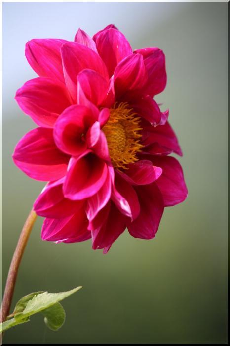 ~ 棚田に咲く花9