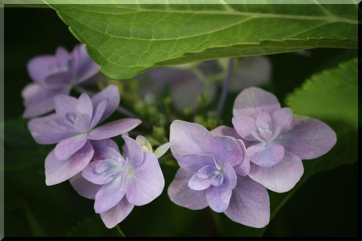 ~ 棚田に咲く花15