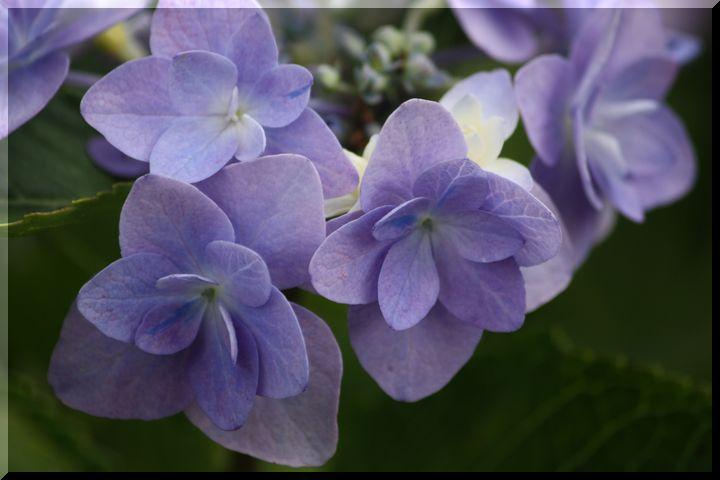 ~ 棚田に咲く花16