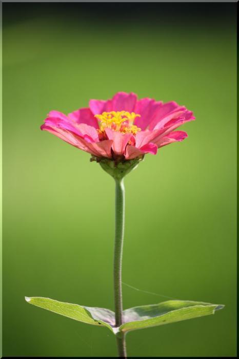 ~ 棚田に咲く花17