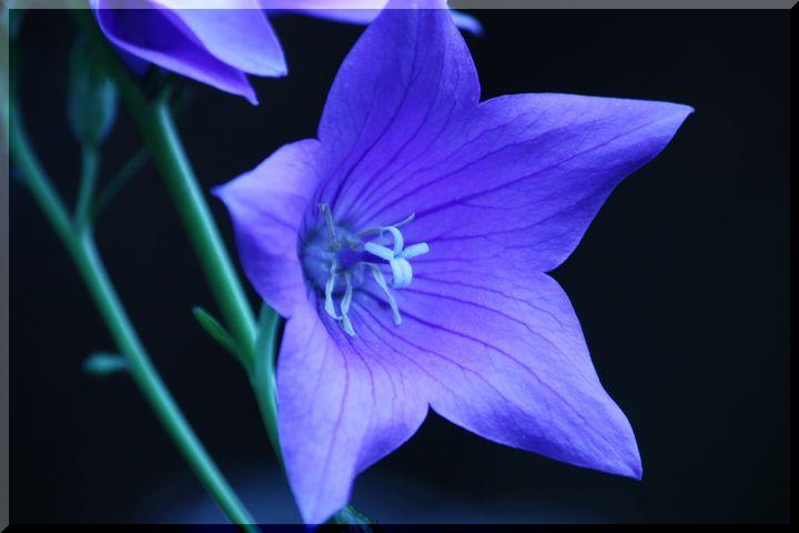 ~ 環境楽園花11