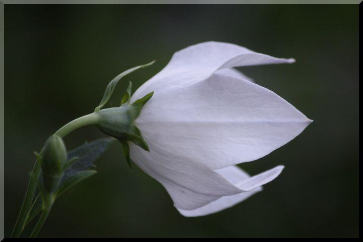 ~ 環境楽園花12
