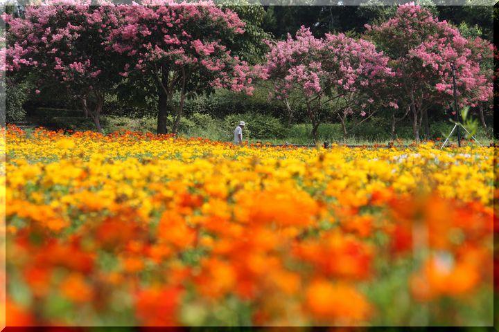 ~木曽三川公園5