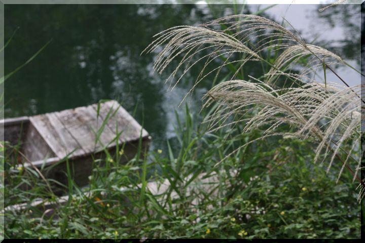 ~ 河川環境楽園3