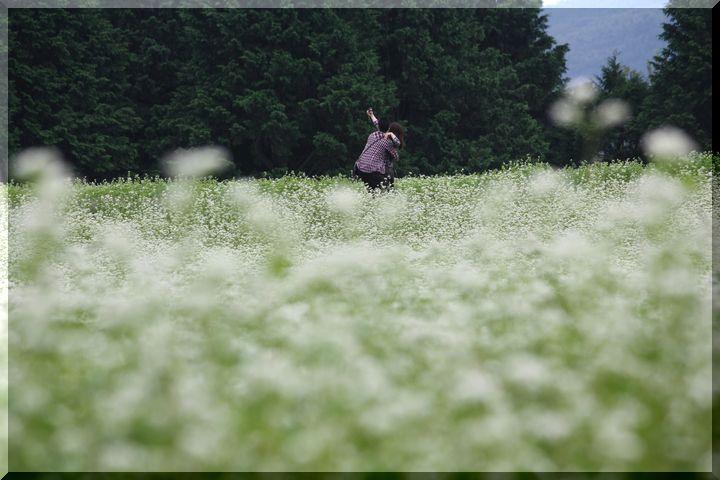 ~ 蕎麦畑5