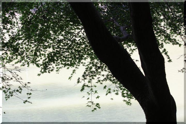 ~ 伊自良湖9