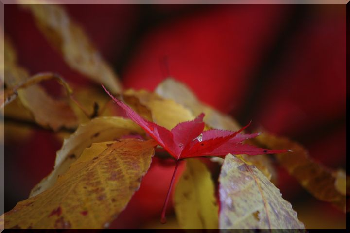 ~ 紅葉を副えに2