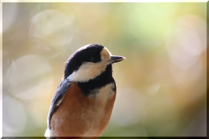 ~ 野鳥6
