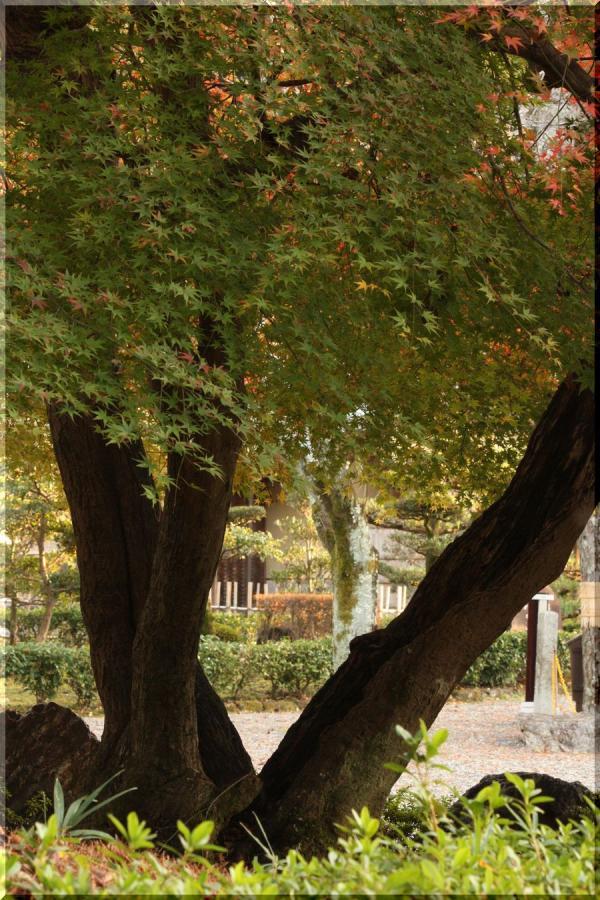 ~ 岐阜公園紅葉遊び5