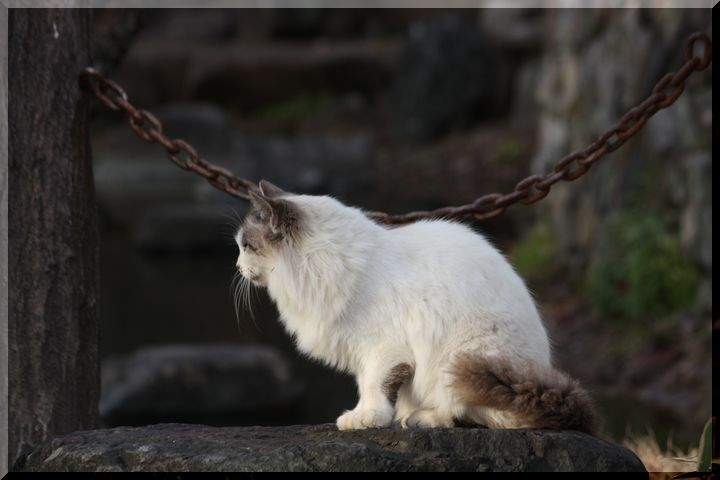 ~ 野良猫1