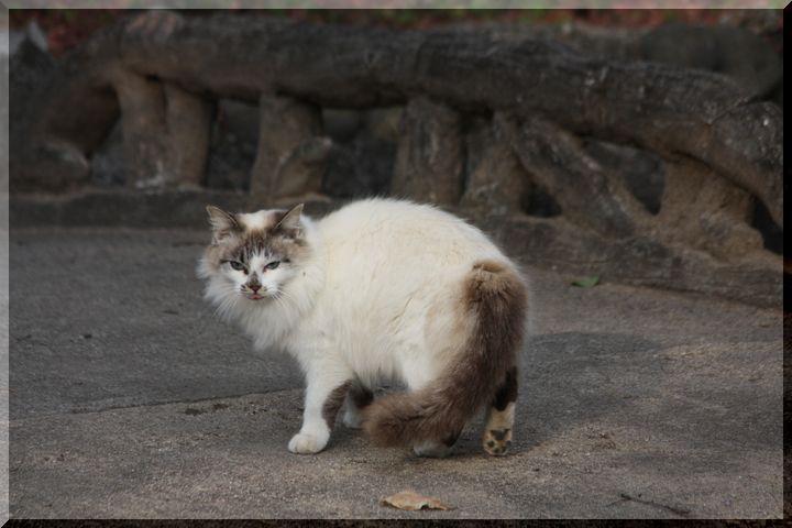 ~ 野良猫2