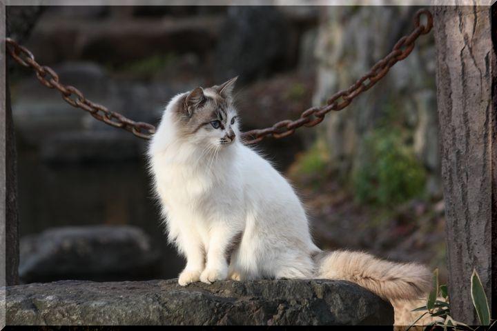 ~ 野良猫4
