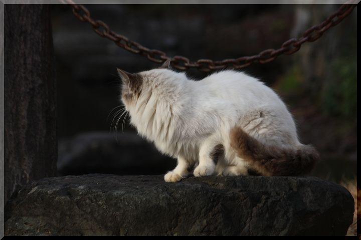 ~ 野良猫5