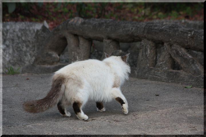 ~ 野良猫6