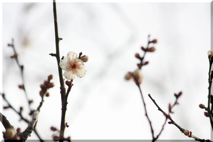 ~ 梅林公園梅9
