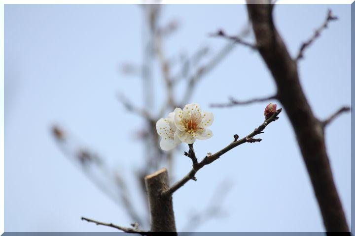 ~ 梅林公園梅12