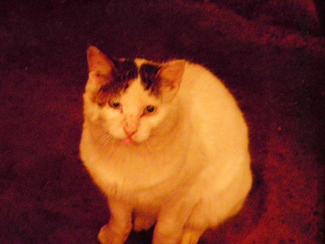 2010マグロ汁猫
