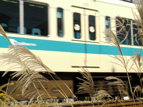小田急線とすすき