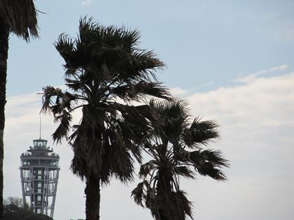 風で揺れるヤシの木