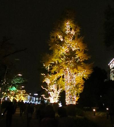 光る街路樹