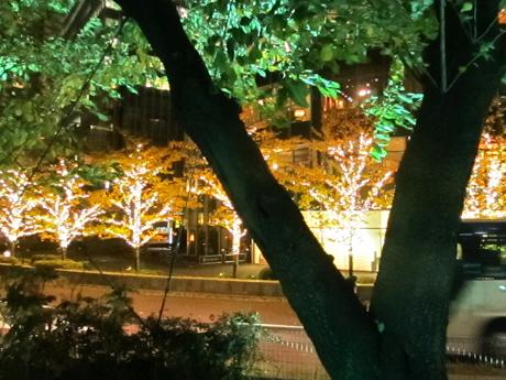 木から見えるイルミネーション
