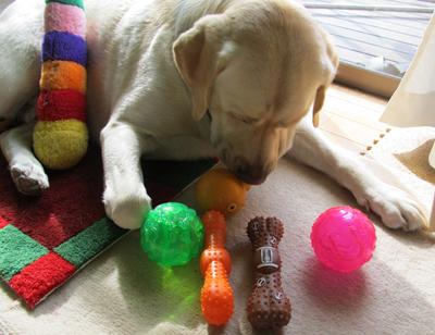 どのボールで遊ぶの?