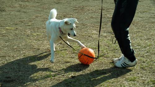 サッカーする犬2