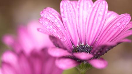 庭のお花2