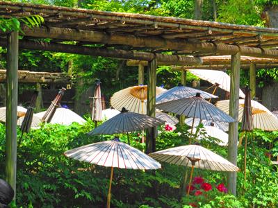 牡丹園の傘